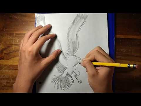 Dibujar un Fénix a lápiz (Ave de fuego) HD [720p]
