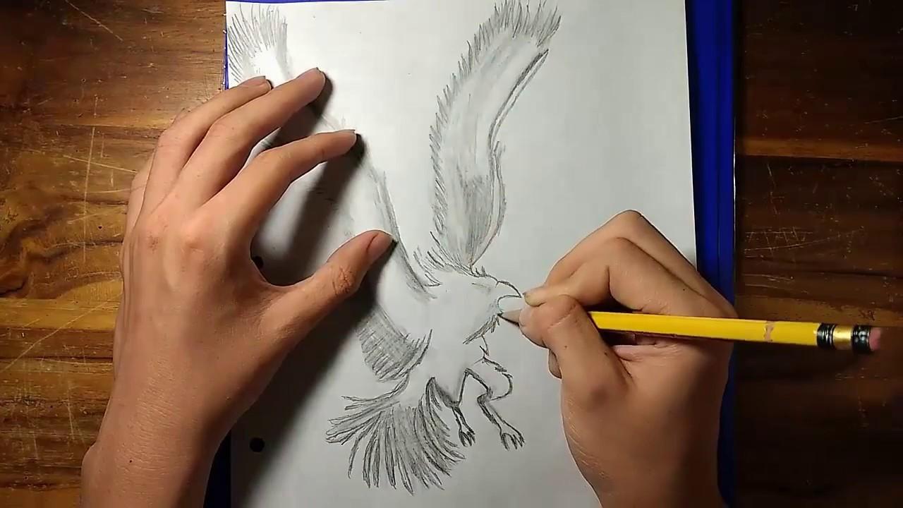 Dibujar Un Fénix A Lápiz Ave De Fuego Hd 720p Youtube