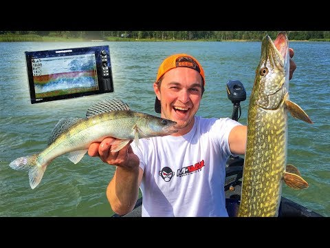 CATCH MORE FISH Using Electronics - Perch, Pike, Zander And Roach On Lures