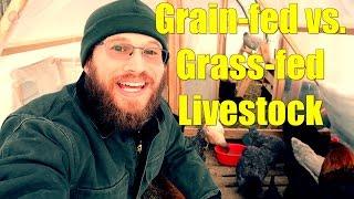 Grain-fed vs Grass-fed Livestock
