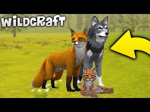 Создал Семью в СИМУЛЯТОР ЖИВОТНЫХ - WildCraft: Симулятор Жизни Зверей Онлайн