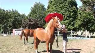 [Tuto n°4 : ] Désensibiliser un cheval peureux