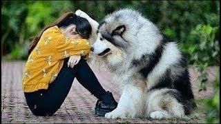 Intenta ver este video sin morir de ternura  Animales Tiernos  #1