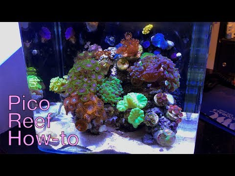 How To Pico Reef With Worldwide Corals