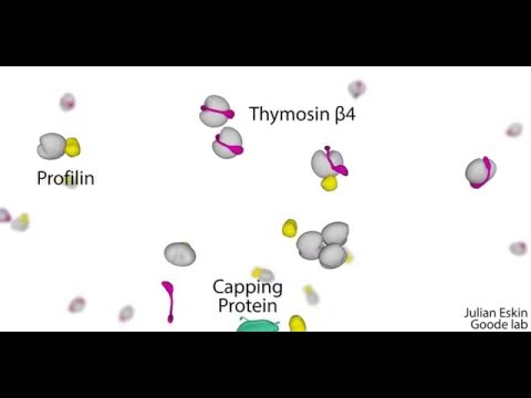 Cellular barriers to actin nucleation