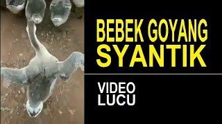 VIDEO LUCU BEBEK GOYANG SYANTIK