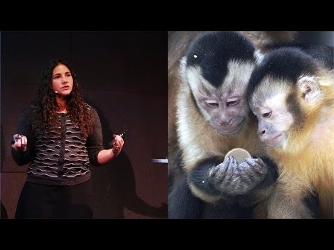 The Evolution of Irrationality: Insights from Primates - AMNH SciCafe