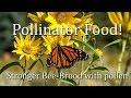Honeybee September nectar and pollen resources What Honey Bees Eat in Autumn