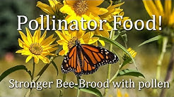 Honey bee pollinator September nectar and pollen resources What Honey Bees Eat