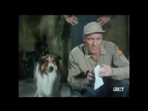 "lassie---episode-#397---""the-waif""---season-12,-ep.-12---11/28/1965"