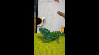 Lizard Plays a Bug Catching Game and Lands One