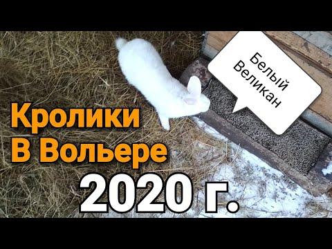 Видео: Кролики. Заселение 2020. Как живут кролики в вольере?