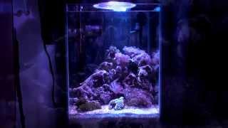 海水アクアリウムを始めよう!其の五 [Japanese Marine Aquarium Beginning Vol.5]
