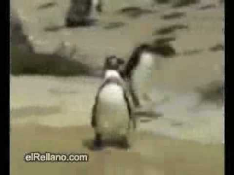 Video Pinguin Wochenende