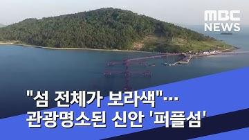 """""""섬 전체가 보라색""""…관광명소된 신안"""