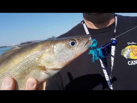 Detroit River Walleye Run 2018 With Big Mike's Fishing Charters!