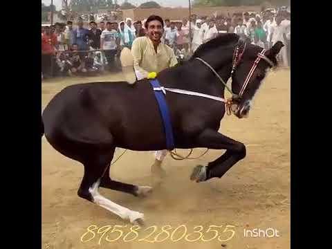 इस गोड़े के डांस बाद आप भी इस गोड़े के दीवाने हो जायेगें is gode ke dans ke bad aap bhi is ke diwane