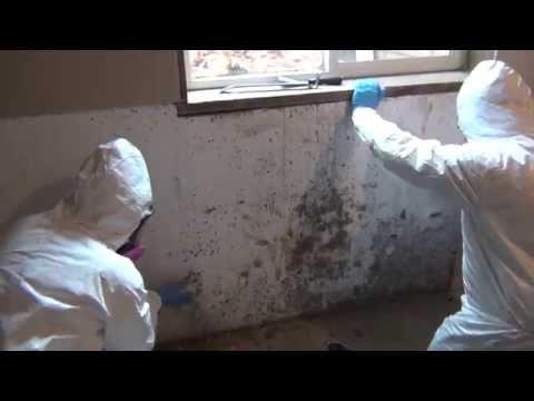 Certified Professional Restoration - Mold Remediation