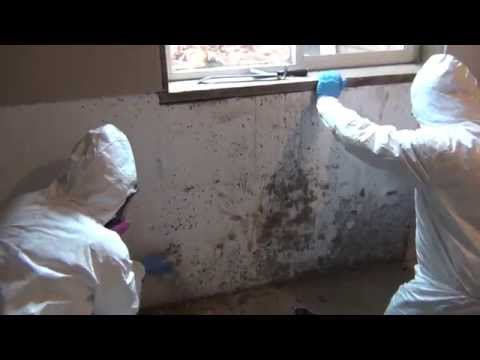 Certified Professional Restoration - Mold Remediation