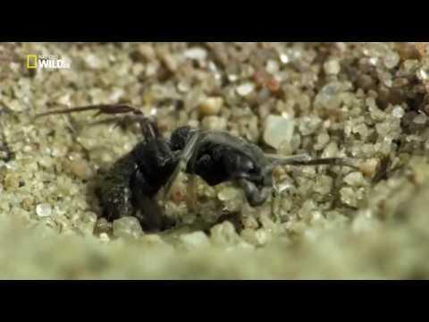 Удивительные насекомые.Incredible Insects HDTVRip - Познавательные и прикольные видеоролики