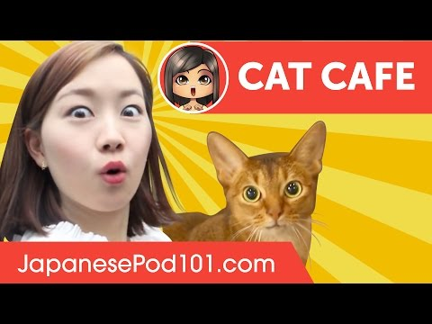 Cat Cafe in Japan (Việt Sub)