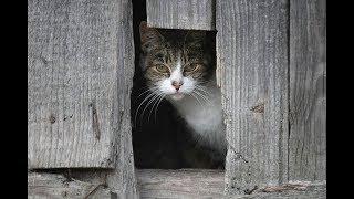 Чем живет приют для кошек?