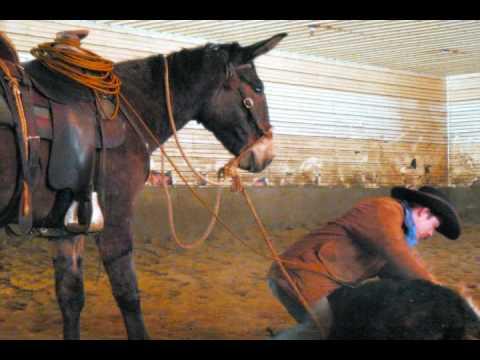Eeyor working cattle