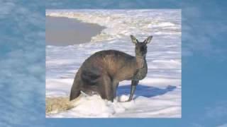 pronunciation vocabulary for esl students australian kangaroos