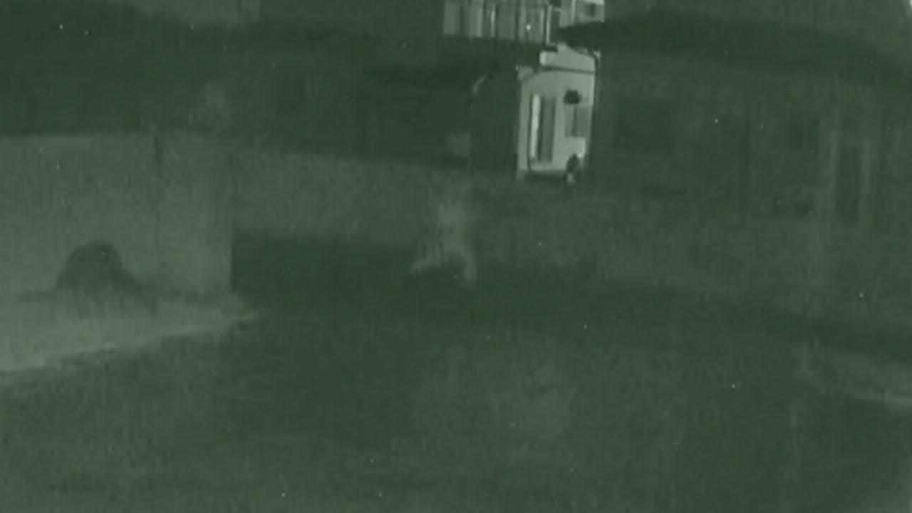 八千代 町 殺人 事件 防犯カメラに逃げる人影 茨城・八千代町で殺人事件