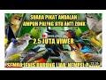 Suara Pikat Semua Burung Kecil Dijamin Lengket Buat Burung Bandel Susah Turun  Mp3 - Mp4 Download