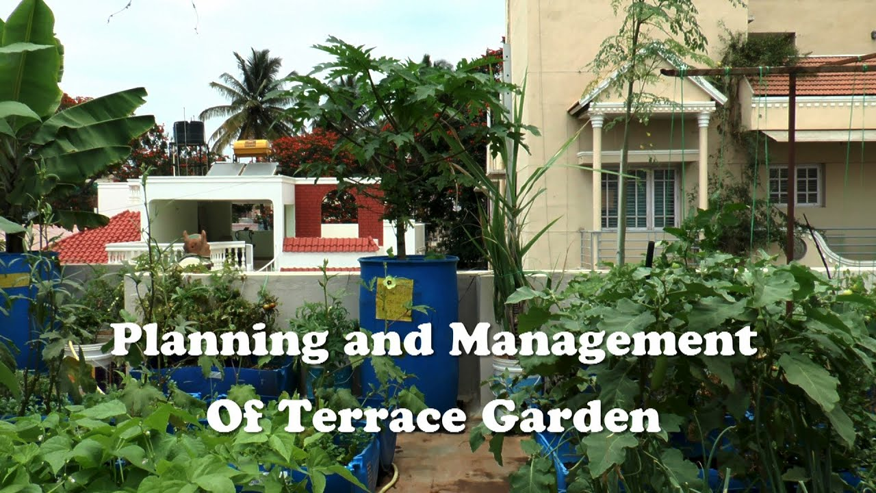 Planning & Management of Terrace Garden - YouTube on greenhouse landscaping, greenhouse cucumbers, greenhouse tomato, greenhouse horticulture, greenhouse vegetable gardening, greenhouse plants, greenhouse home, greenhouse gardener,