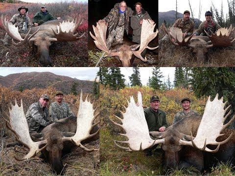 Alaska Yukon Moose Hunting 15 Big Bulls Moose Taken