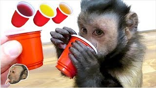 Monkey Red Solo Cups!