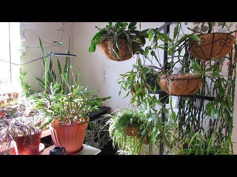 Houseplants and Cacti & Succulent Plants Tour Part Four - Office / Grow Room