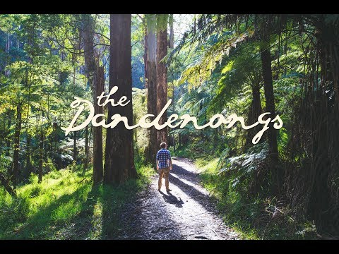 Hiking the Dandenong Ranges National Park - Melbourne, Australia