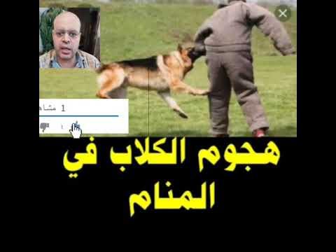هجوم الكلاب في المنام لابن سيرين تفسير حلم الكلاب تلاحقني تفسير الأحلام محمود أحمد منصور Youtube