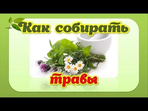 Травяные сборы для очищения организма от шлаков: травы для