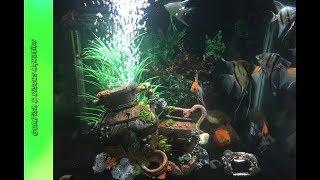Community tank New decor