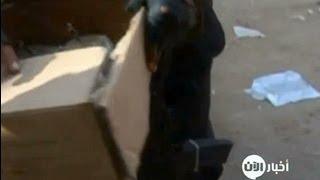 أخبار الآن - القوات المصرية تقوم بعملية مداهمات في كرادسة قرب القاهرة