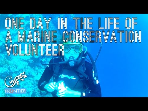 One Day in the Life of a Marine Conservation Volunteer