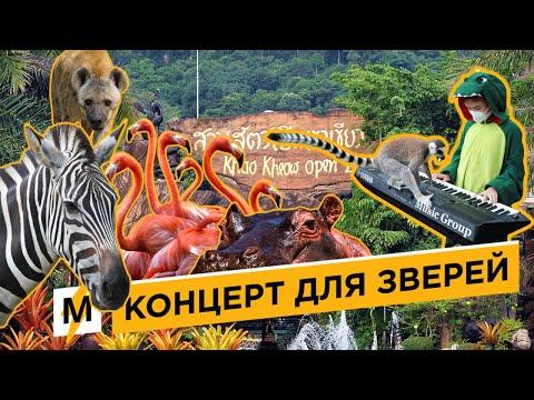 Школьница Из Таиланда Даёт Концерты Животным В Зоопарке