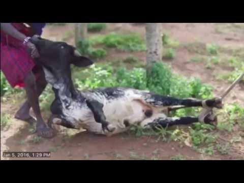 Maasai Traditional song (Eoko)
