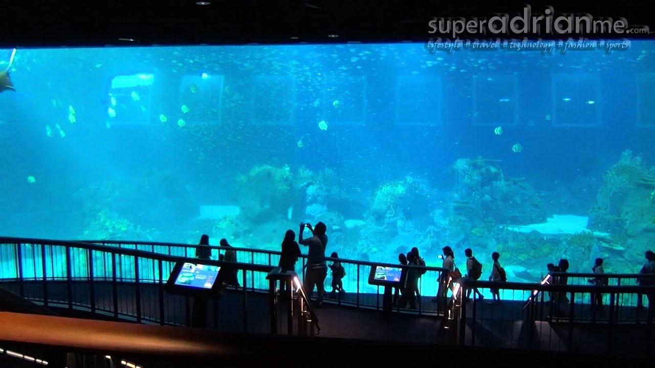 Rws Marine Life Park S E A Aquarium Superadrianme