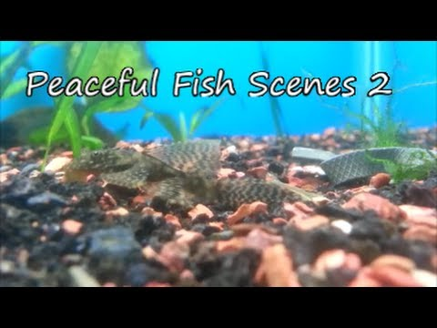 Peaceful Fish Scenes 2 HD ~ Contest Entry