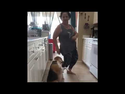 Sylvia Chacon -  Bailey the Chubby Beagle Dances 'Reggaeton' with Grandma!!!