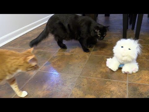 2 Cats React to Robot Cat
