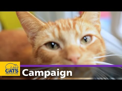 Cats Protection's Manifesto For Cats