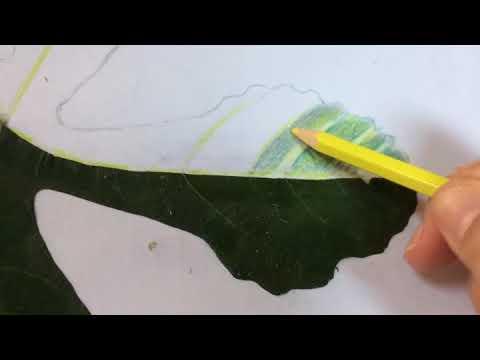 Kuru Boya Yaprak çalışması Youtube