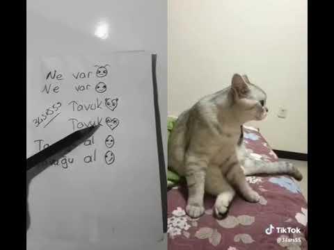 Yemek yerken Allah razı olsun diyen kedi