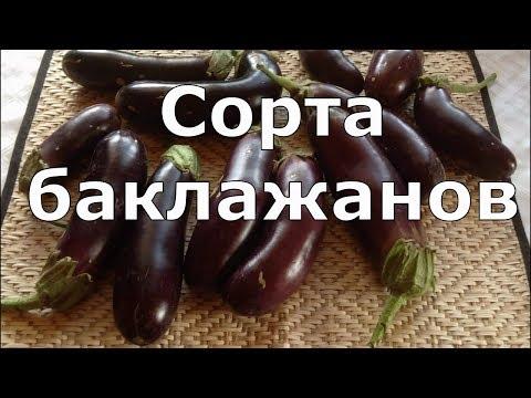 Вопрос: Баклажан Кабанчик описание сорта, фото Какие отзывы?